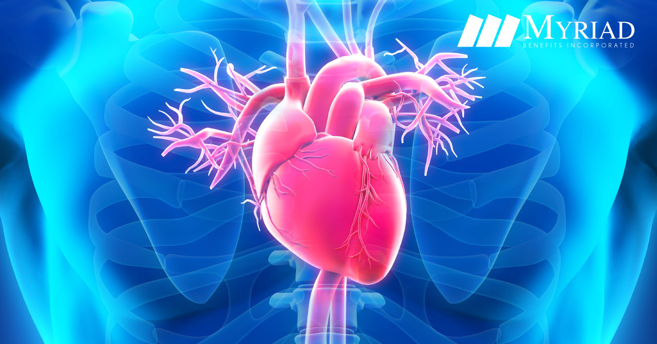 Curiosidades Sobre El Corazón Humano - Myriad