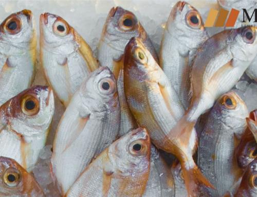 ¿Puedo comer pescado si soy alérgico al marisco?